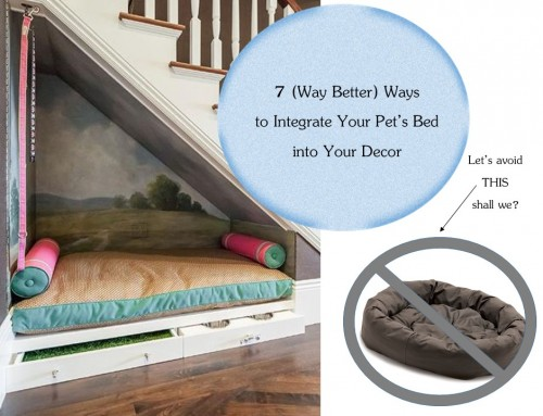7 (Way Better) Ways to Integrate Your Pet's Bed Into Your Décor: LiLu's Look of the Day