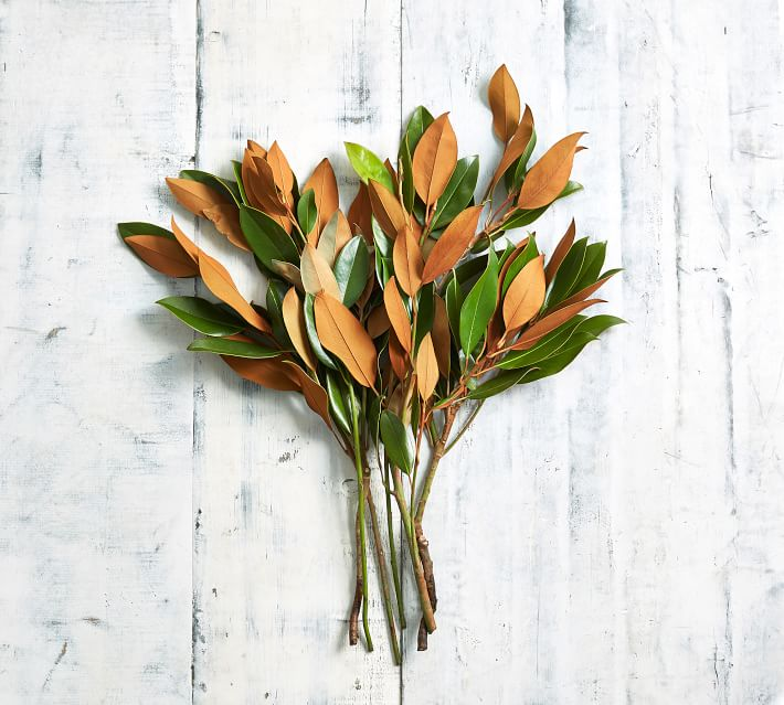 Magnolia leaves for christmas window boxes