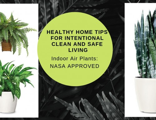 Healthy Home Tips for Intentional Clean and Safe Living – Indoor Plants
