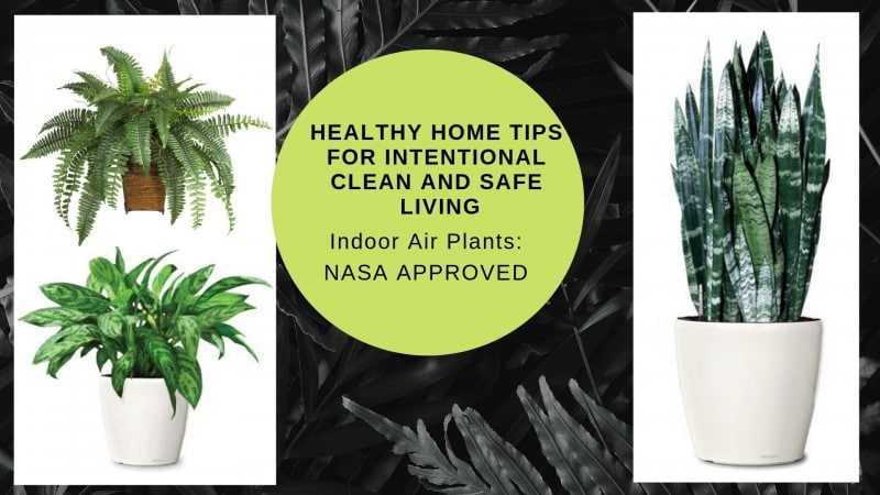Healthy-Home-Tips-for-Intentional-and-Safe-Living-Minneapolis-indoor-plants-Interior-designer-55405.jpeg