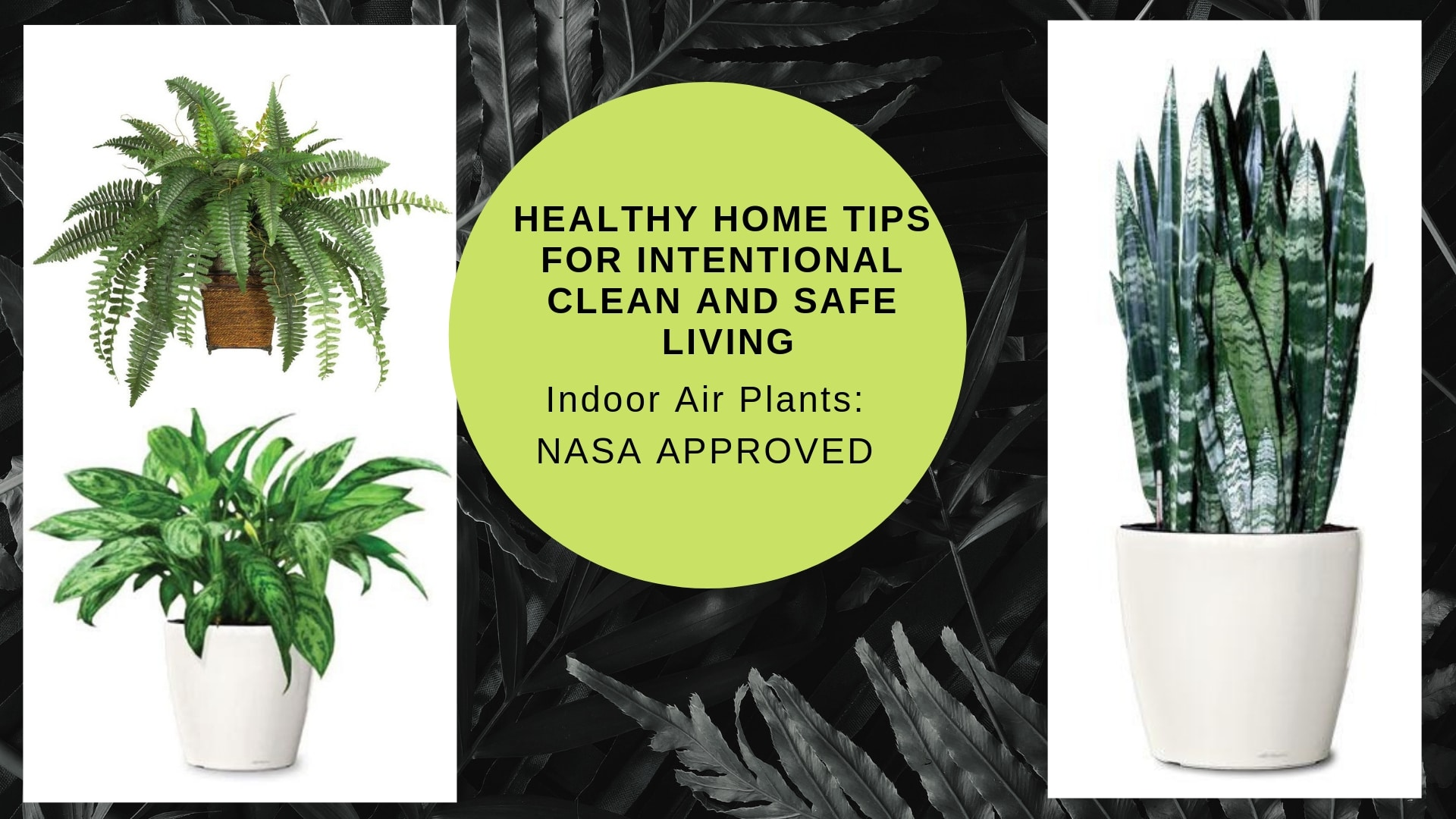 Healthy Home Tips For Intentional Clean And Safe Living Indoor Plants