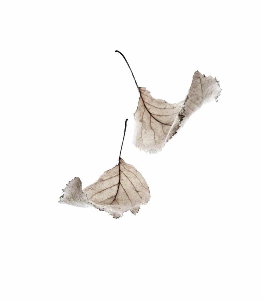 mary-jo-hoffman-MN-artist-leaves.jpg