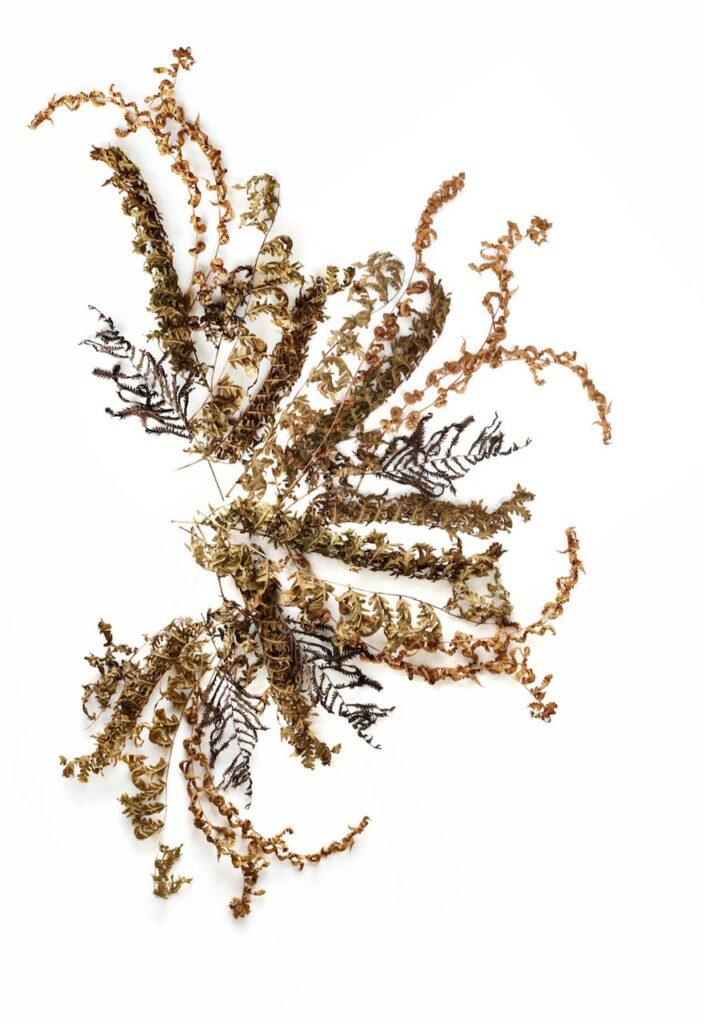 mary-jo-hoffman-mn-artist-brown-leaves.jpg