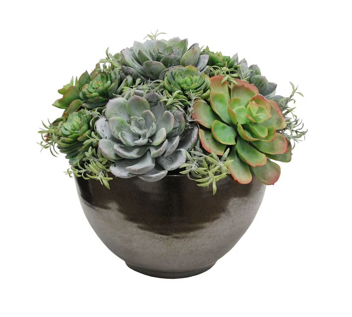 healthy-home-succulents-lilu-interiors-design-minneapolis-55405.jpg